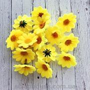 Головки цветов ромашки желтые